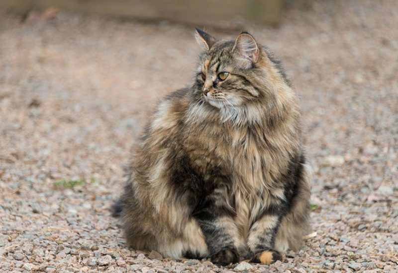 Lovis the boss cat